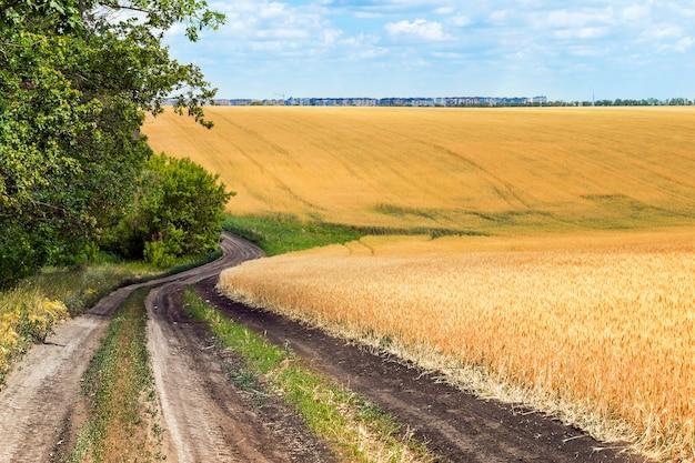 小麦畑の近くの道端に緑色の木々が付いている埃道