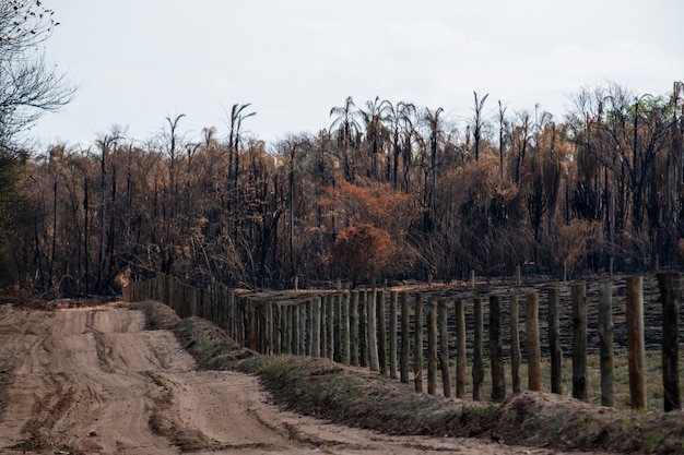 Dirt road with vegetation all burned after fire.