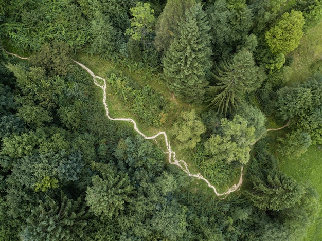 Dirt track through mountains and forest captured from above