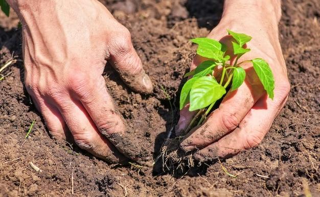 男性の手と地上の植物の汚れた泥だらけ