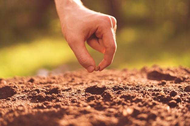 汚れた農夫の手が土の穴に植物の種を置きます