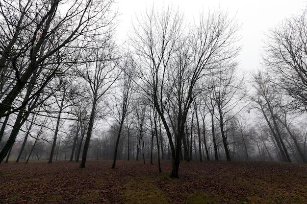 낙엽 수가있는 가을 숲의 땅에 더러운 단풍, 흐린 날씨의 풍경