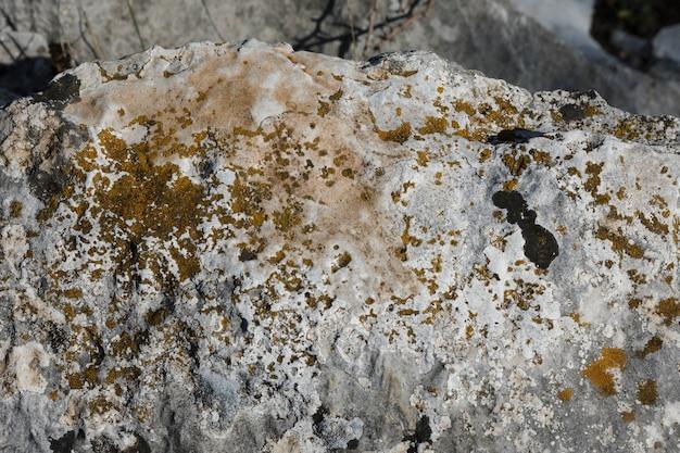 岩の上の汚れた菌