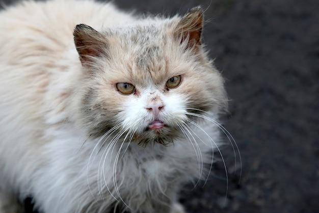 더러운 노숙자 거리 심술 고양이