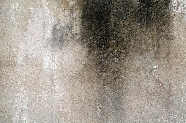 Dirty lichen stain house
