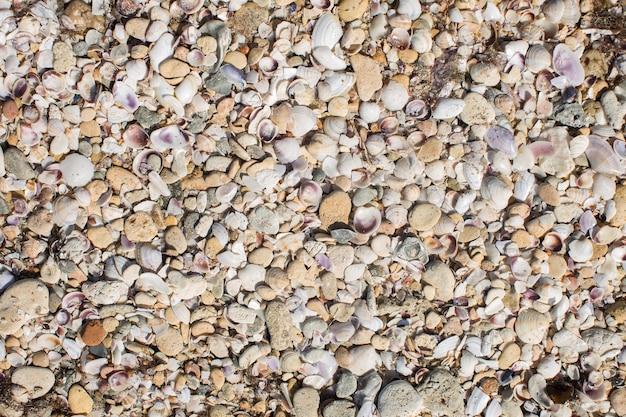 Грязная морская волна прибила к берегу старые грязные водоросли.