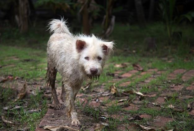 Грязная бездомная собака гуляет по улице после дождя