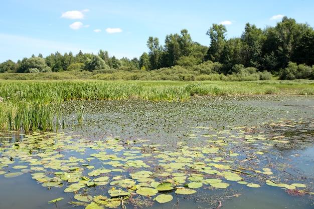 Грязное болото на поверхности травы