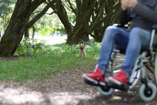 障害者の概念を持つ人々のための公園のペットで犬と一緒に歩く障害者