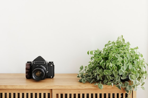 Dischidia oiantha plant by an analog camera on a wooden cabinet
