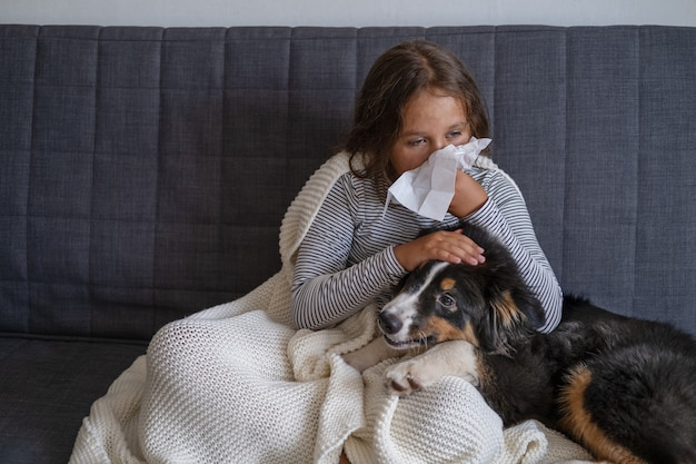 Diseases from pets concept. girl is sneezing from fur allergy on the sofa and playing with her australian shepherd three colours puppy dog.