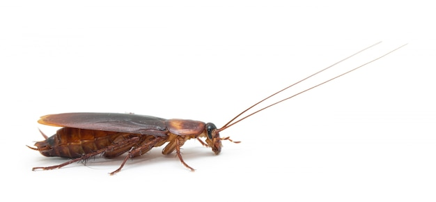 Disgusting cockroach