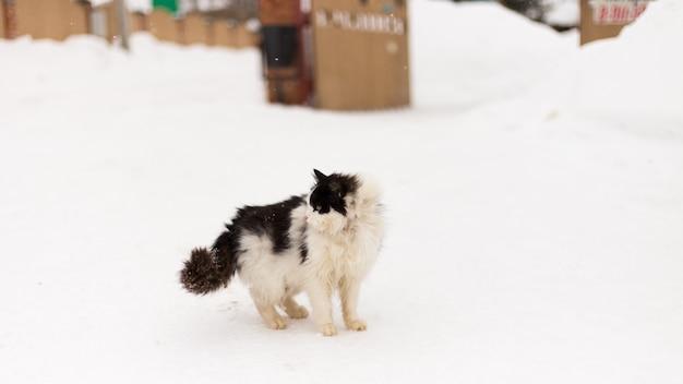Растрепанный кот в снегу