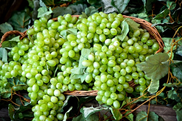 Display of bunches of fresh white grapes