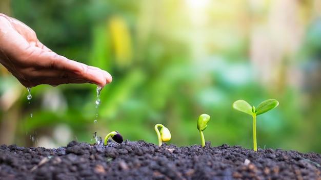 식물의 성장 단계와 식물의 물주기, 농부를 위한 심기 아이디어 및 투자를 표시합니다.