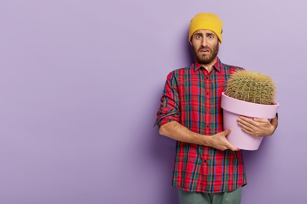 Displeased young male botanist holds big pot of cactus, wears checkered shirt and yellow hat, has no wish to care about house plant, stands against violet  wall with copy