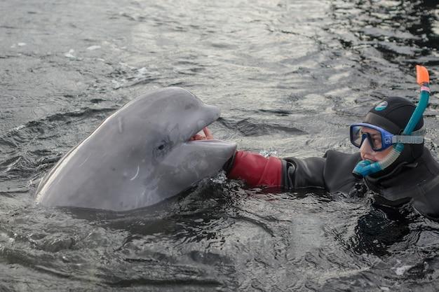 웃고 있는 어린 벨루가 고래를 만지는 잠수부