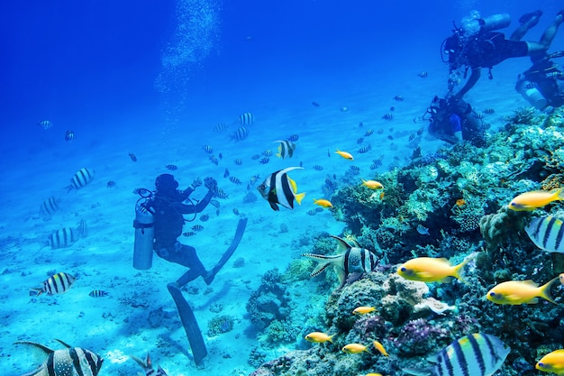 Divers swimming underwater with coral reefs