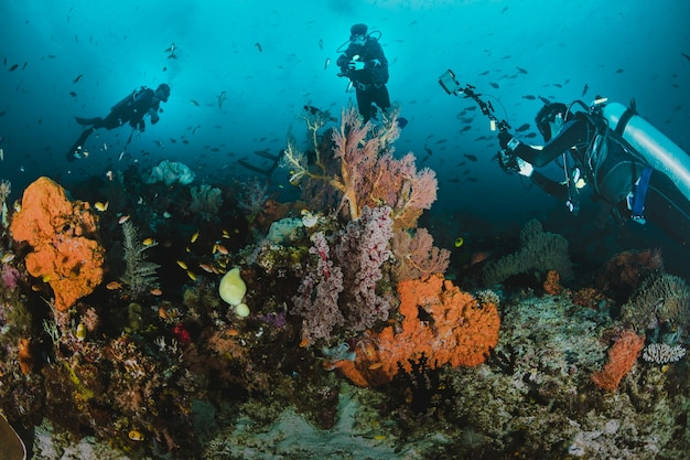 Divers taking pictures of a reef.