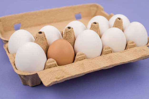 Концепция разнообразия. крупным планом фото десяти и одного коричневых яиц в картонной коробке, изолированной фиолетово-фиолетовой поверхностью
