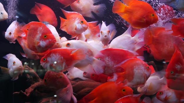 エキゾチックな装飾水族館における熱帯魚の多様性。魚市場のペットショップでの品揃え。