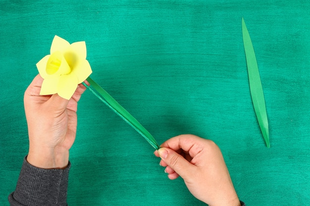 Diy spring flowers daffodils of yellow paper on a green background.