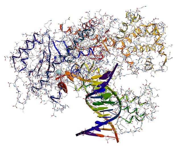 Dna polymerase i. an enzyme that participates in the dna replication