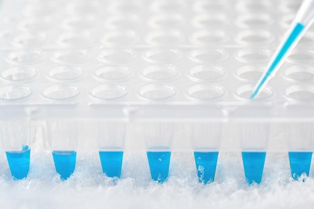 ターコイズ色の反応混合物とdnaを増幅する使い捨てのプラスチックウェルで満たされたプラスチックの先端