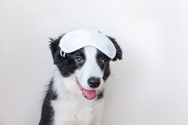 私を邪魔しないで、私を眠らせてください。白い背景で隔離の眠っているアイマスクと面白いかわいい笑顔の子犬の犬のボーダーコリー。休息、おやすみ、シエスタ、不眠症、リラクゼーション、倦怠感、旅行のコンセプト。