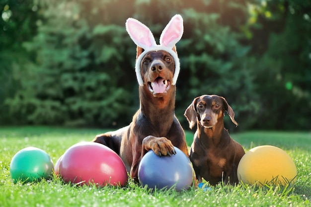 Doberman and dachshund dogs at the lawn with easter eggs