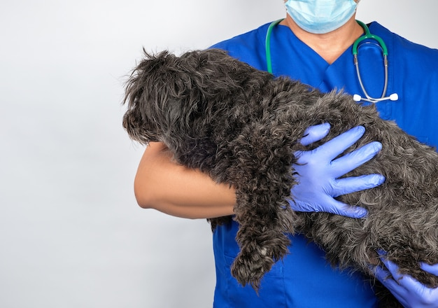 Doctor in blue uniform and sterile latex gloves holding a fluffy dog