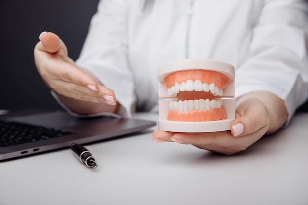 医者の歯科医は手に顎のモデルを示しています