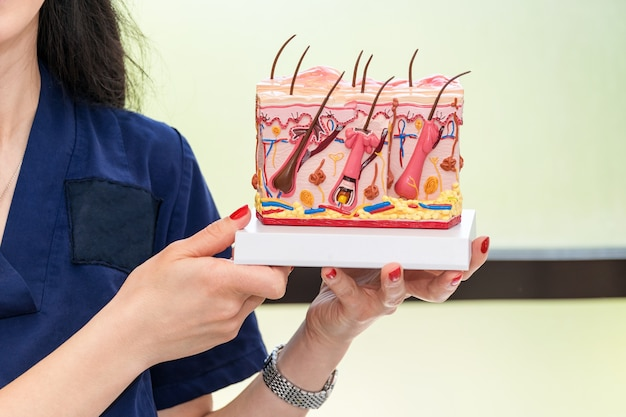 의사 피부과 의사가 인간의 피부 단면 플라스틱 모델을 잡고 보여주는