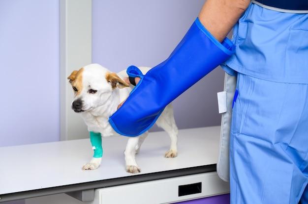X線室で犬を診察する医師