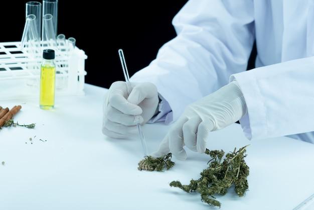 医師の手を握って、患者の医療用マリファナとオイルを提供します。