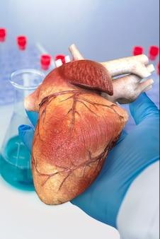의사는 인간의 심장을 손에 들고 임상 실험실 배경