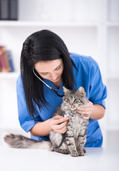 Doctor is making a check up of a cute beautiful cat.