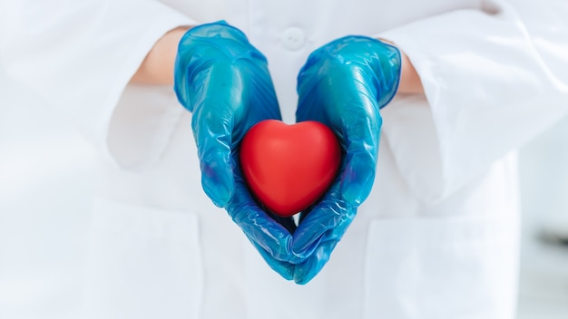 Doctor in protective gloves holds the heart .
