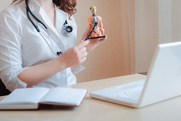 의사의 손을 잡고 인간 장기의 해부학 모델