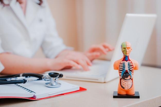 인간 장기의 노트북과 해부학 모델을 사용하는 의사
