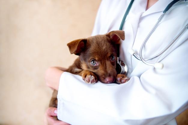 Врач ветеринар, осматривающий собаку