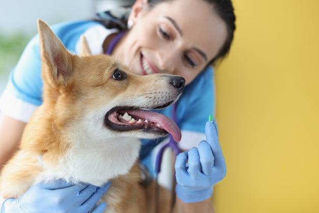 Врач-ветеринар держит зеленую капсулу с лекарством перед собакой в клинике для домашних животных