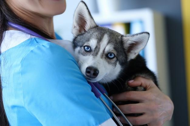Врач-ветеринар, держащий больную породистую собаку в клинике