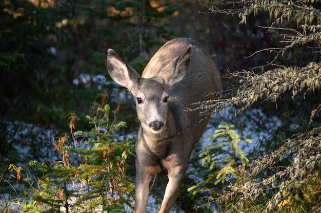 国立公園の森で実行されているdoeまたは鹿