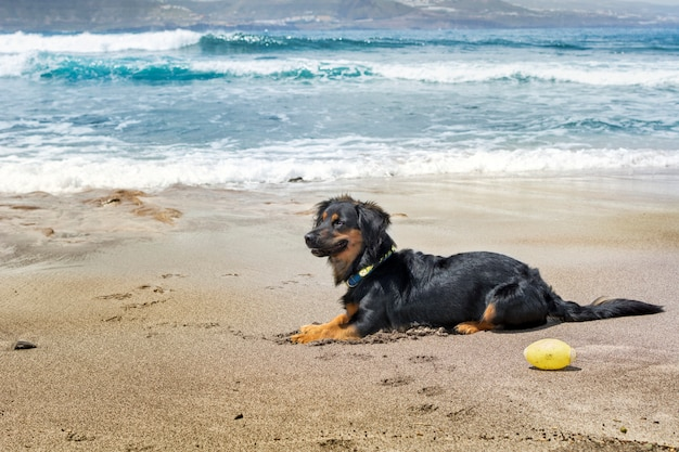 Dog alone sitting on the beach, on the sand, with the blue sea behind and lit by sunlight.