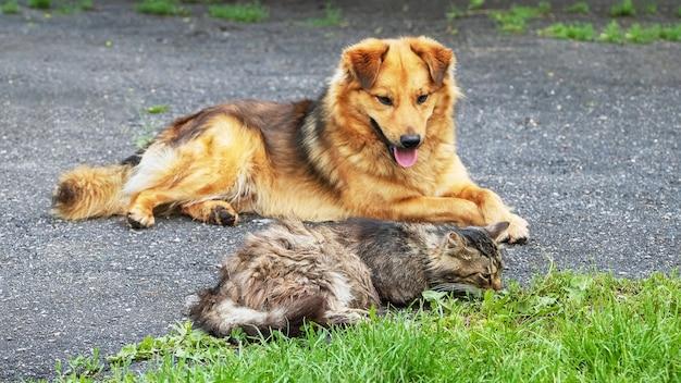 Собака и кошка лежат на аллее в саду возле зеленой травы
