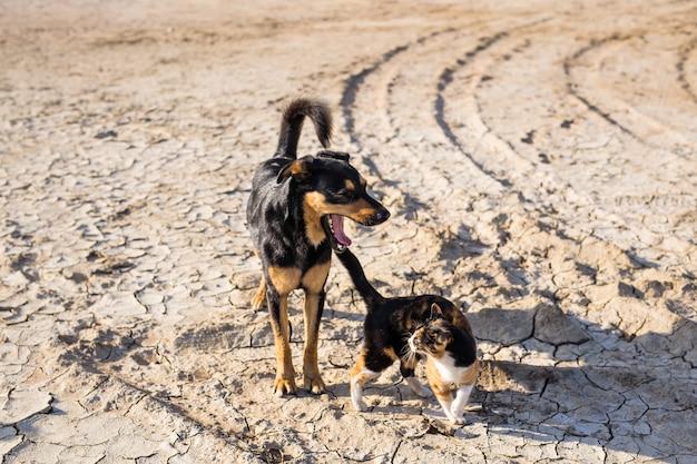 Собака и кошка играют вместе на открытом воздухе