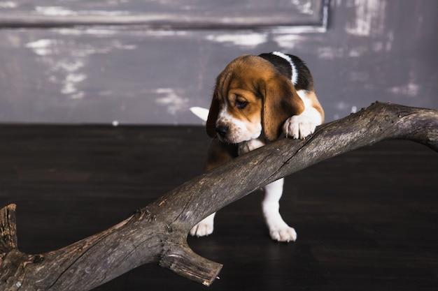 Собака и сухая ветка