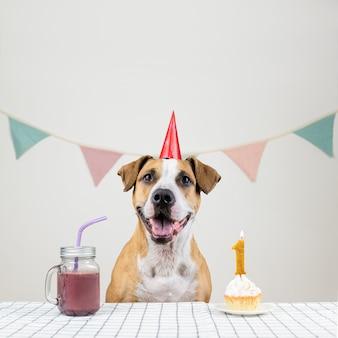 개와 그녀의 생일은 축제 케이크와 음료의 형태로 취급됩니다. 머핀으로 장식 된 방에서 포즈 파티 모자에 귀여운 강아지