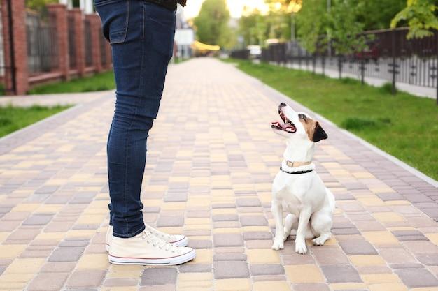 犬と飼い主のジャックラッセルテリアは、公園での散歩、路上での忍耐強く従順な散歩を見込んでいます。教育と訓練の犬。